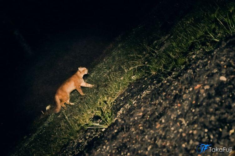 Siapa Bela Kucing dekat jalan lama tu?